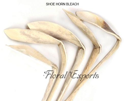 Shoe Horn Bleach