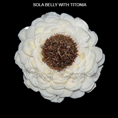 Sola Belly Flowers with Titonia