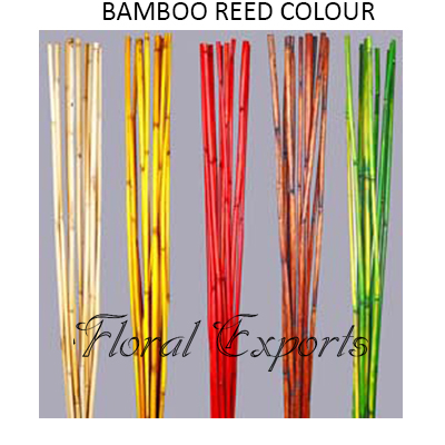 Bamboo Reed Colour 1mtr - Bulk Decorative Bamboo Sticks