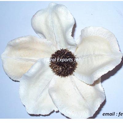 Jacaranda Splited Flower Bleach Loose