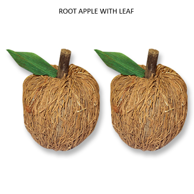 Root Apple with LVS - Dried Handicraft Wholesale