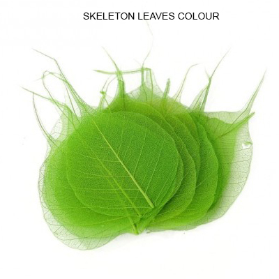 Peepal Skeleton Leaves Green - Skeleton leaves bulk Suppliers
