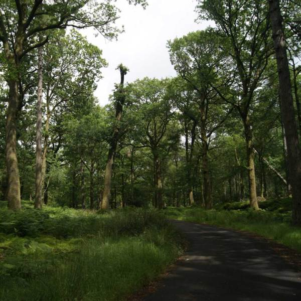 Drifters Guide Lake Distrikt - UK