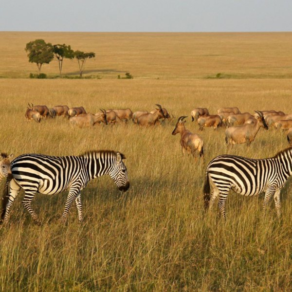 Drifters Guide Kenya adventure safari tour