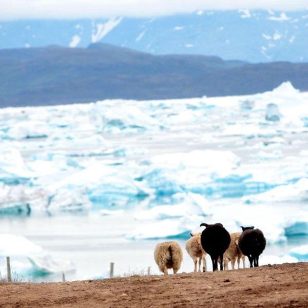Drifters Guide Greenland Experience Tour