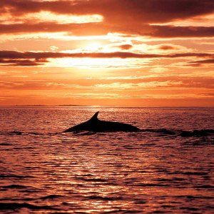 Silent Whale Watching Tour - Drifter's Guide to the Planet