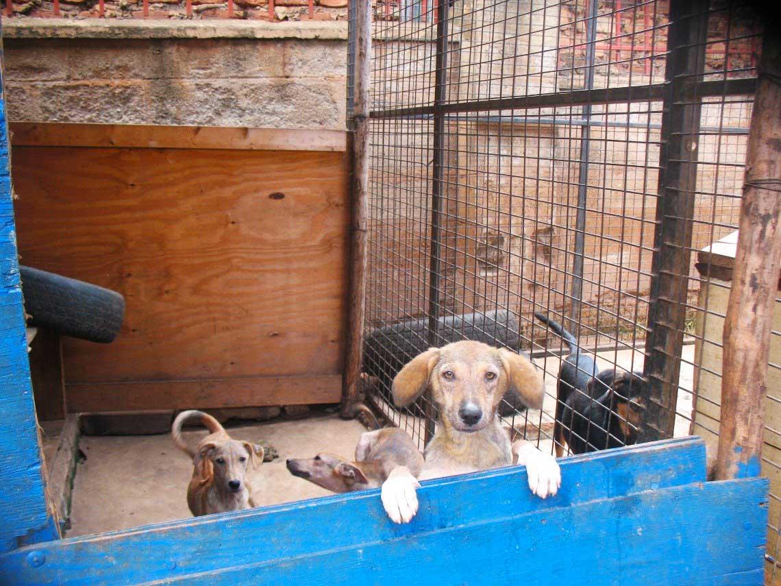 volunteering with animals Uganda