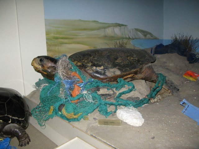 Caretta Caretta NetEntangle_sm