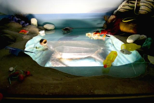 Crime Against Nature (Leatherback sea turtle)