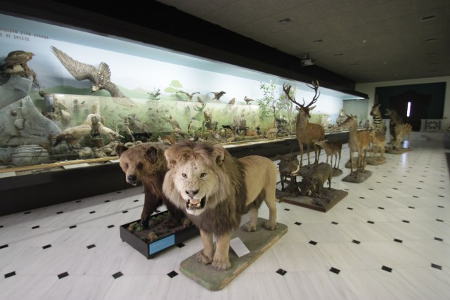 Goulandris Museum Taxidermy Hall