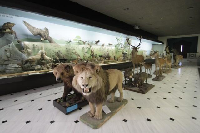 Goulandris Museum Taxidermy Hall