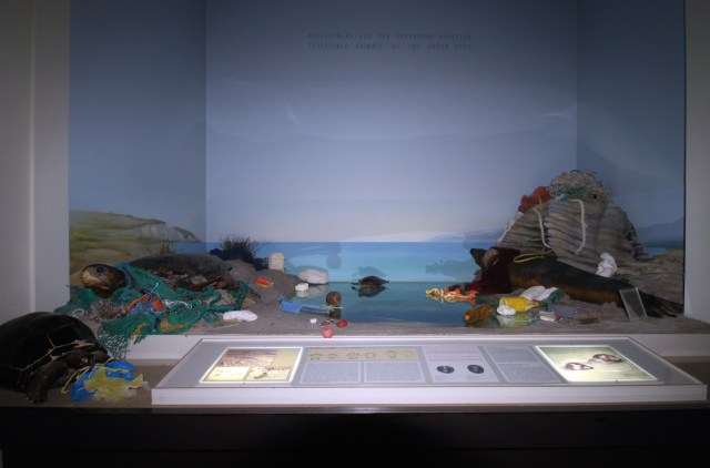 Plastic_TurtleSealDiorama_Intervention_sm