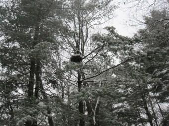 Crows' nest?