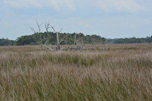 driftwood island 013