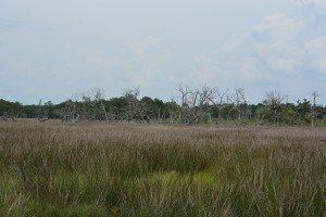 driftwood island 017