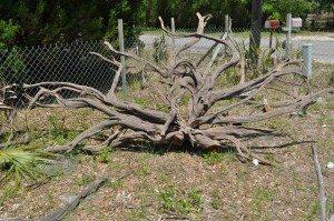 driftwood island 066