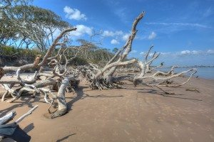 the boneyard, a driftwood beach