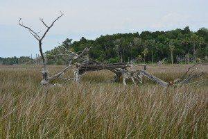 driftwood island 015