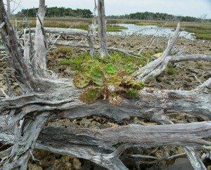 driftwood island 032