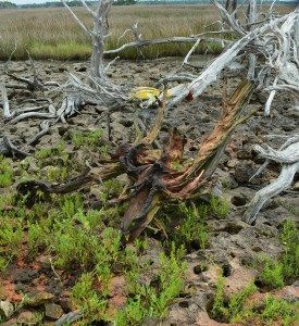 driftwood island 039