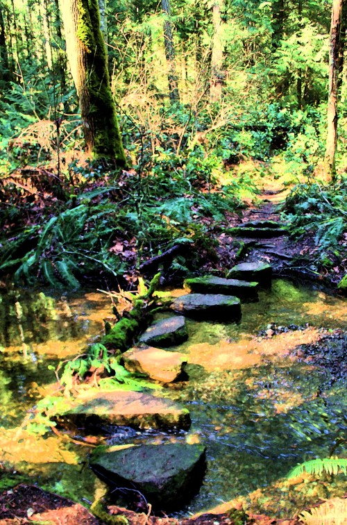 Looking for Alice ...Stepping stones in a local forest