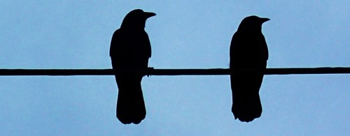 """Heckle and Jeckle """" I say old chap!"""""""