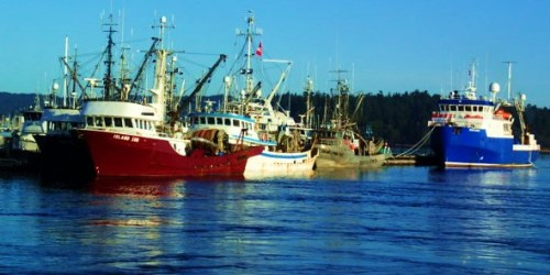 Big Boats for Tiny Fish. Tensions rise as the weeks pass while waiting for the arrival of the herring