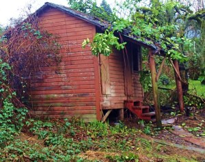 The Shack Out Back Now a backyard storage shed, this may well have been an early home in downtown Ladysmith