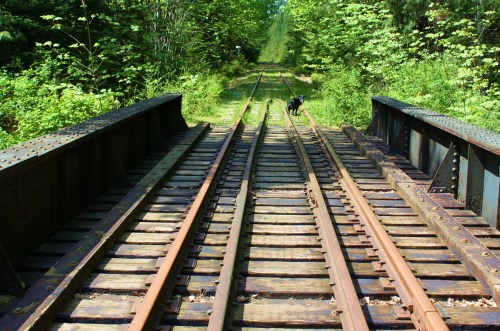 Jack on track. Heading for what's around the next bend. Esquimalt & Nanaimo rail bridge over Rosewell Creek