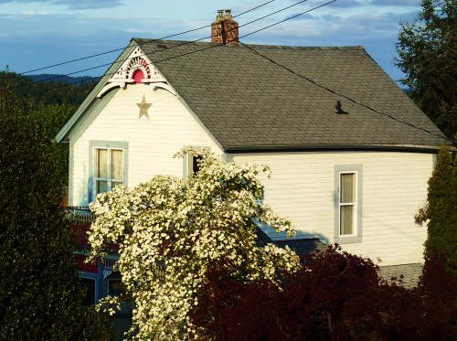 Another Ladysmith classic (Damn those wires!)