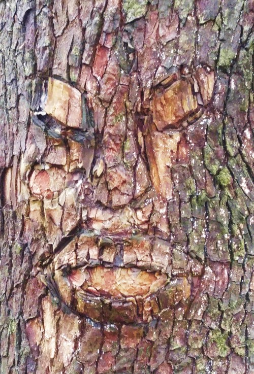 Suddenly On Day! After years of walking by this Arbutus tree, I notice the face cleverly carved around a knot