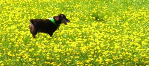 Jack out standing In his field. Dogs can teach us so much.