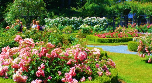 Ho Hum, just another rose garden