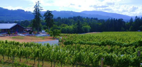 A view of the Blue Grouse vineyard Cowichan Valley, Vancouver Island.