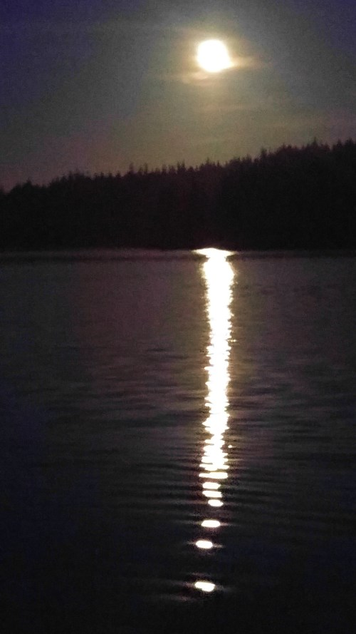 August full moon in Blunden Harbour. Of all my cameras. this was the best frame, taken on my cell phone!