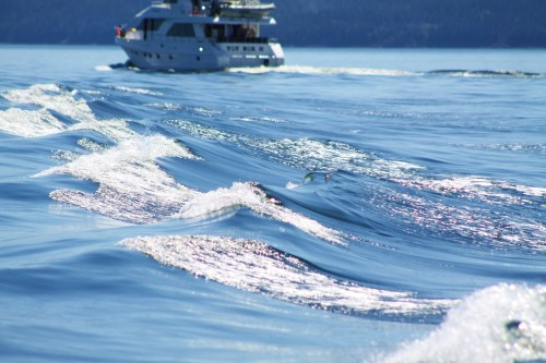 Thanks for the wake dude! The boat name was 'Toy Box II' Some folks just need attention!
