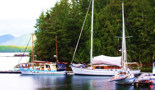 Home is where the boat is...and where the blogs come from. 'Seafire' is the left of the tiny liveaboard community here at Shearwater. There are five of us in all.