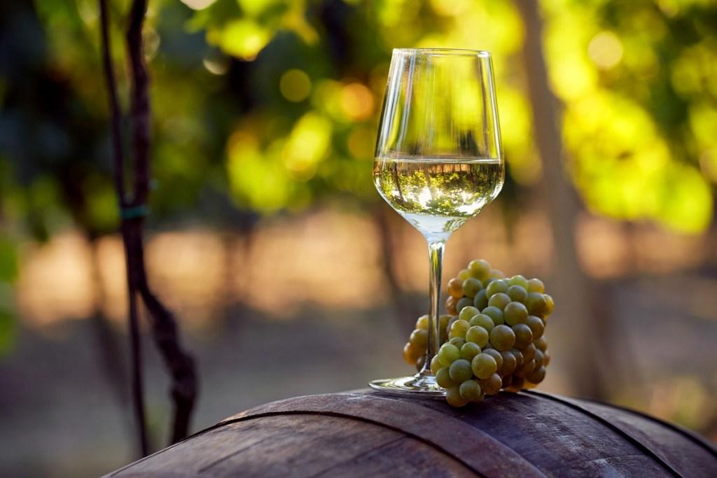 migliori vini abruzzesi bianchi trebbiano