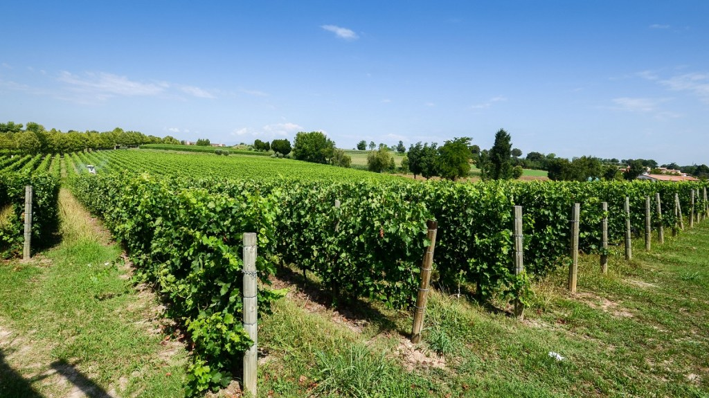 lugana vitigno sirmione
