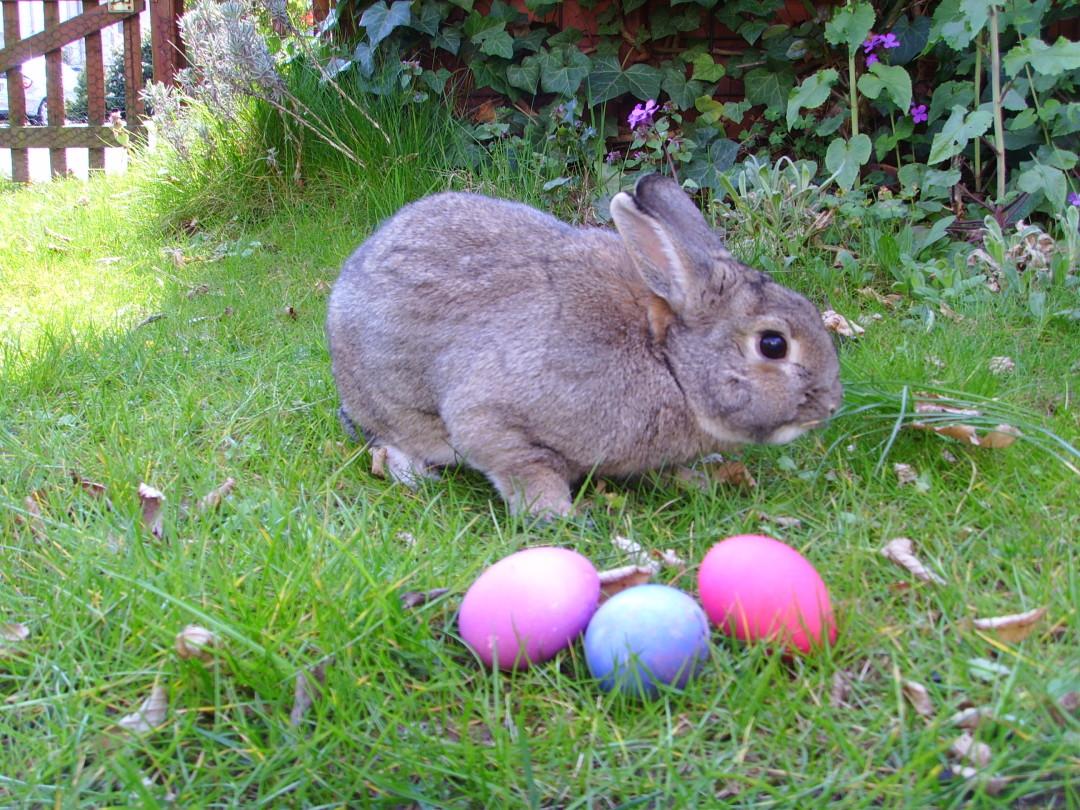 Hop Along Easter Bunny