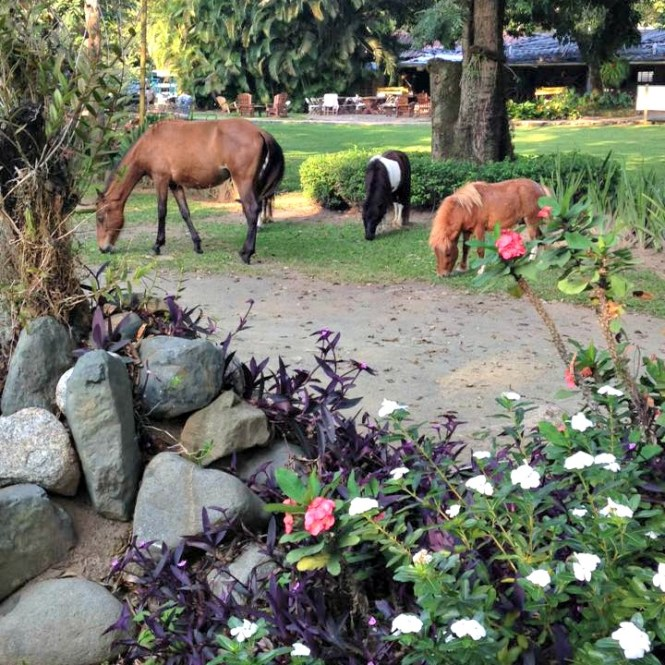 Morning at Rancho Baiguate