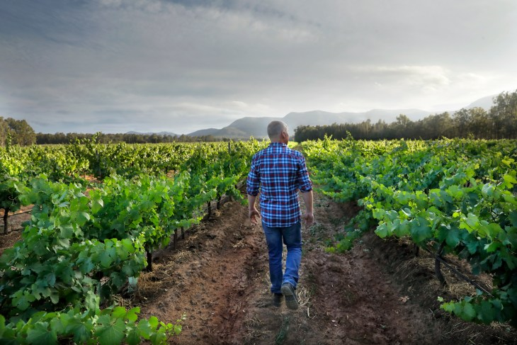 Andrew Thomas of Thomas Wines in the Braemore Vineyard, Hunter Valley NSW