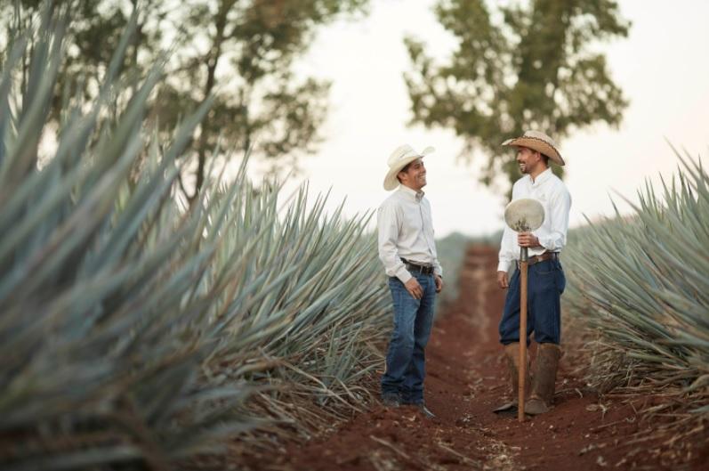 Patron tequila jimadors
