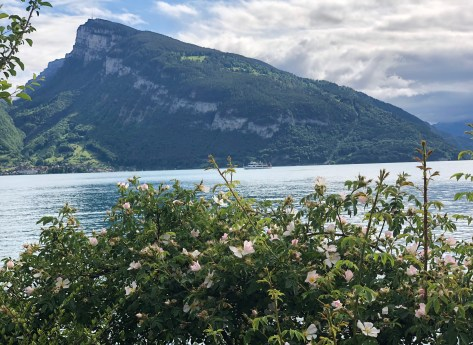 Finding wine paradise in Switzerland