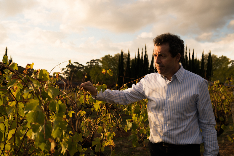 Penfolds winemaker talks about wine, life and (of course) the pandemic