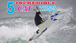 Amazing things cats can do