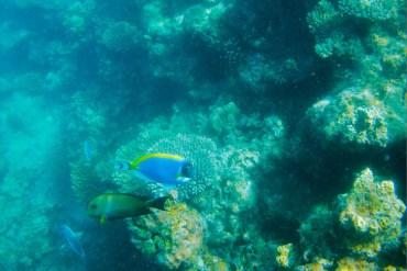quali pesci si vedono alle maldive