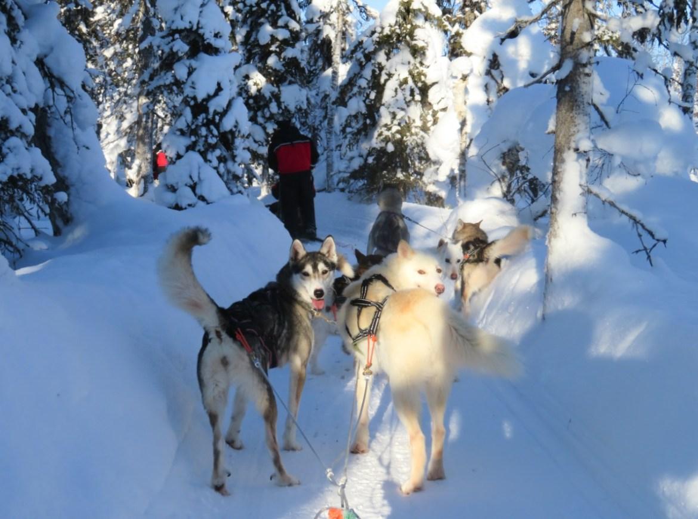 viaggio lapponia finlandese