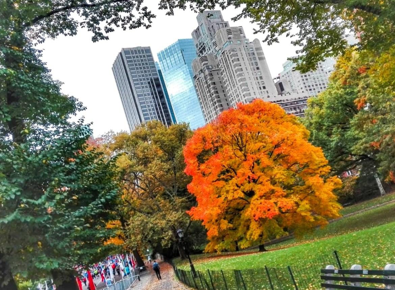 quando vedere il foliage a central park