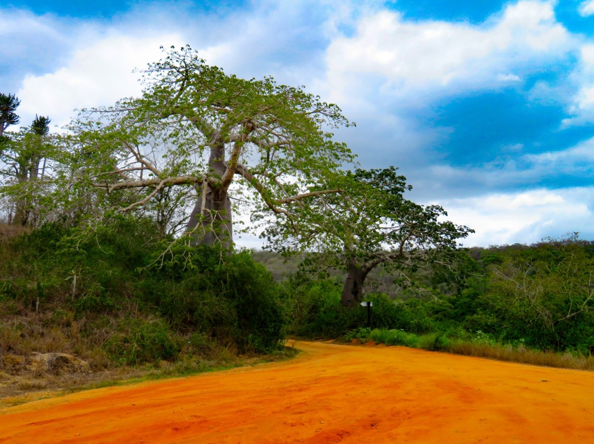 Cosa vedere in Angola